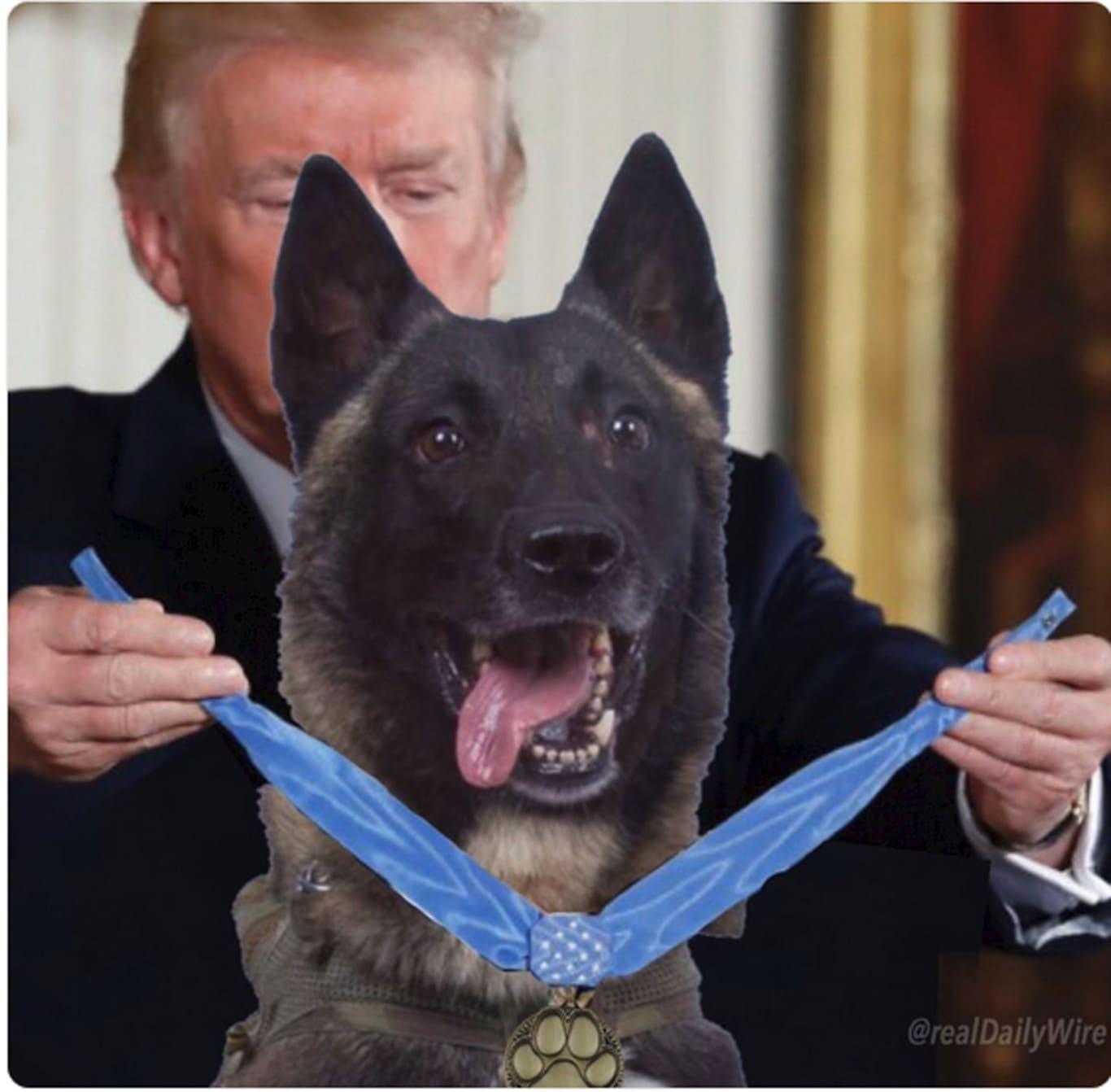Donald Trump perro
